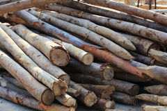 Pile of wood sticks Stock Image
