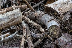 A Pile of Wood Trunks and Branches Left to Dry stock photography