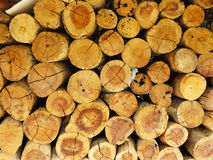 Pile of wooded logs Stock Images