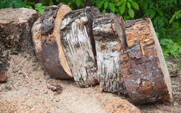 Pile of wooden chumps Stock Photography