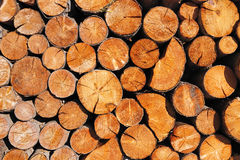 Pile of wooden logs Royalty Free Stock Image