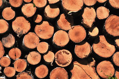 Pile of wooden logs. Wooden logs stacked in a pile Stock Photo