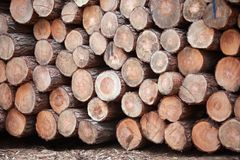 Pile of wooden logs Stock Photos