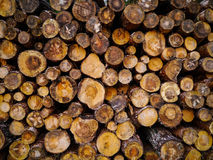 Pile of wooden logs Stock Images