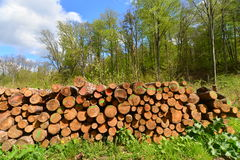 Pile of wooden logs Stock Image