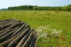 Pile of wooden logs near the forest Royalty Free Stock Photography