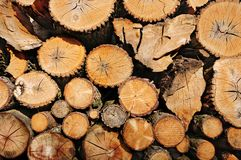 Pile of wooden logs, sawn ends view Stock Image
