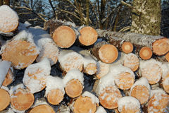 Pile of wooden logs in winter snow Stock Image