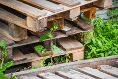 A pile of wooden pallet dumped in the grass. Is close royalty free stock images