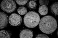 Pile of wooden trunks Royalty Free Stock Images