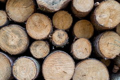 Pile of wooden trunks Stock Photo