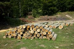 Pile of woods Royalty Free Stock Photos