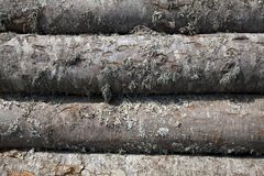 Pile of woods Royalty Free Stock Images