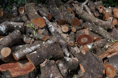 Pile woods cutting Stock Image