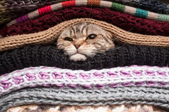 Pile of woolen clothes. The cat is preparing for winter, wrapped up in a pile of woolen clothes Stock Photo