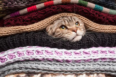 Pile of woolen clothes. The cat is preparing for winter, wrapped up in a pile of woolen clothes Royalty Free Stock Photos