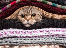 Pile of woolen clothes. The cat is preparing for winter, wrapped up in a pile of woolen clothes Stock Images