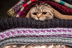 Pile of woolen clothes. Funny cat is preparing for cold autumn and winter, wrapped up and hide in a pile of woolen clothes at home Royalty Free Stock Images