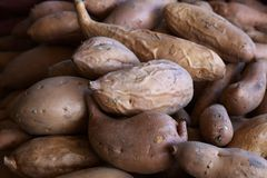Pile of Yams or Sweet Potatoes Royalty Free Stock Photos