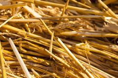 Pile of yellow dry straw royalty free stock photo