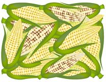A Pile of Yellow Fresh Corns Background Royalty Free Stock Image