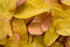 Pile of Yellow leaves abstract close up background Stock Photos