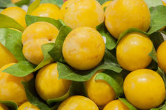 Pile of yellow plums Stock Photo