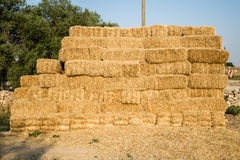 Pile of Yellow Straw Bales Stock Image