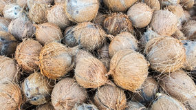 Pile of Young Dry Coconut Coir Husk Royalty Free Stock Image