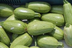 Pile of zucchinis in sunlight stock photos