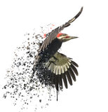 Pileated Woodpecker Watercolor Stock Photography