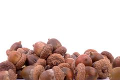 Piled acorns. On white, with copyspace above Stock Photography
