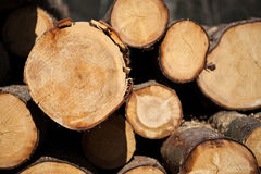 Piled cut tree trunks close-up background Stock Photos