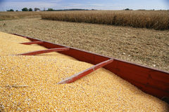 Piled grain Stock Photo