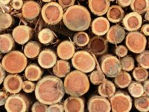 Piled logs Royalty Free Stock Photography