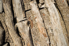 Piled logs background Stock Photo