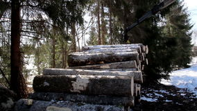 Piled logs on the ground are slowly increasing. Since the log forwarder is continuously adding logs in the pile. Hydraulic instrument. Machine industry stock video footage