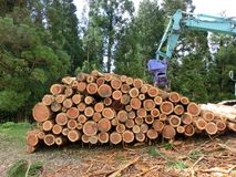 Piled logs and a harvester Royalty Free Stock Photo