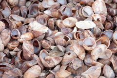 Piled Sea Shells Stock Photography