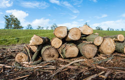 Piled thick trunks along a Dutch dike Stock Images