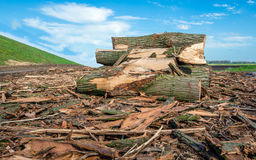Piled thick trunks along a Dutch dike Royalty Free Stock Photo