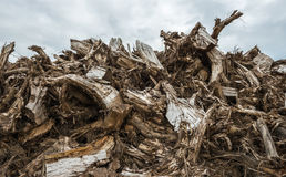 Piled tree stumps from close Royalty Free Stock Photo