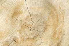 Piled tree trunk. Close up Stock Photography