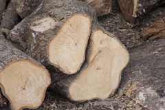 Piled tree trunk Royalty Free Stock Images