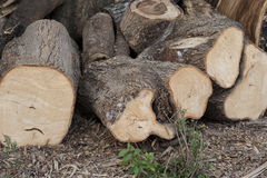 Piled tree trunk Royalty Free Stock Image