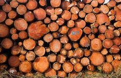 Free Piled Tree Trunks Stock Photos - 108842143