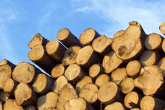 Piled tree trunks Stock Images
