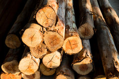 Piled tree trunks closeup Royalty Free Stock Images