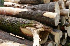 Piled tree trunks closeup Stock Photos