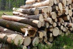 Piled tree trunks closeup Stock Images